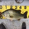 11月13日(水)、神奈川県相模湖にてジグ06スリッパー1/4ozで54.5cm3kgオーバーのビッグフィッシュがキャッチされました!!