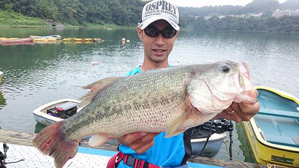 神奈川県津久井湖にて、ドライブシュリンプ4.8″で50cmのビッグバスがキャッチされました!