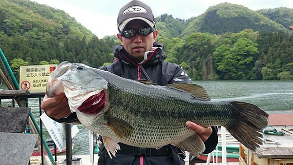 神奈川県相模湖にて、ハイピッチャーで56cm 3,340gのビッグバスがキャッチされました!!