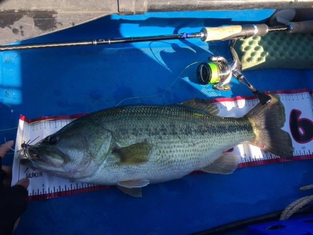 相模湖にて、ジグ05タッガー+HPミノーで56cmのビッグフィッシュがキャッチされました!!