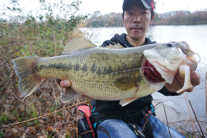 DoliveShad6 48cm_edited-1