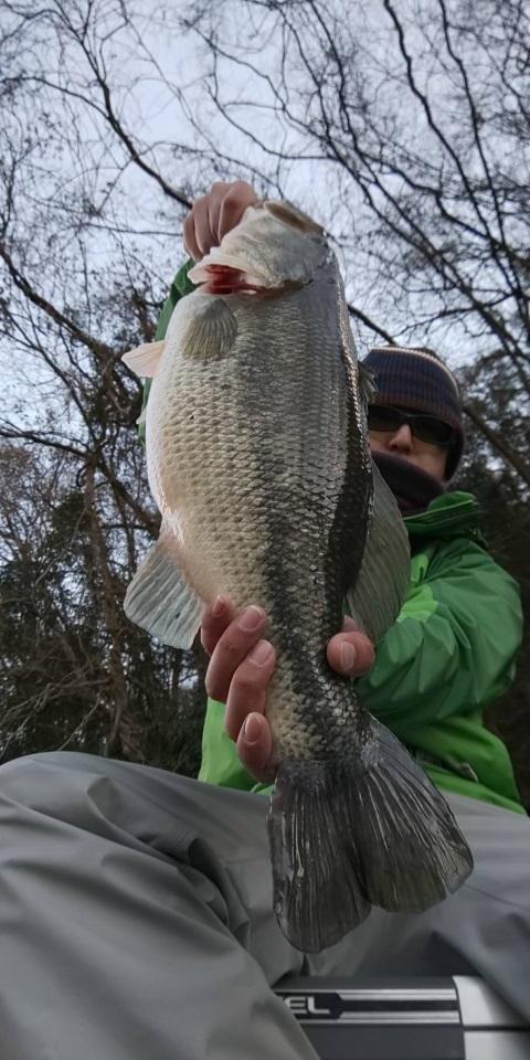 1月3日(木)神奈川県相模湖にてジグ05タッガー5g+ドライブビーバー3.5″で54cmのビッグフィッシュがキャッチされました。