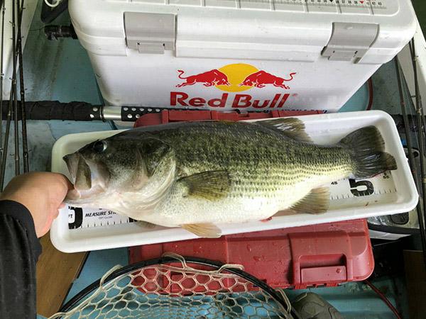 相模湖にて、ドライブシャッド4.5インチで58cm 4kgオーバーのモンスターがキャッチされました!!